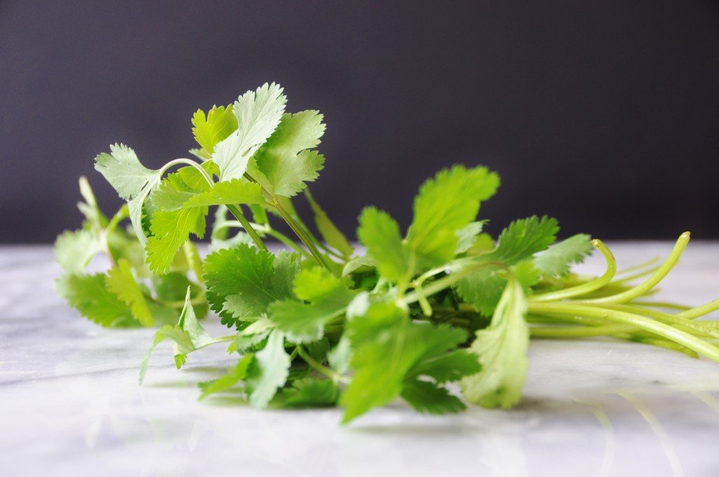 Cilantro sprigs on a marble surface