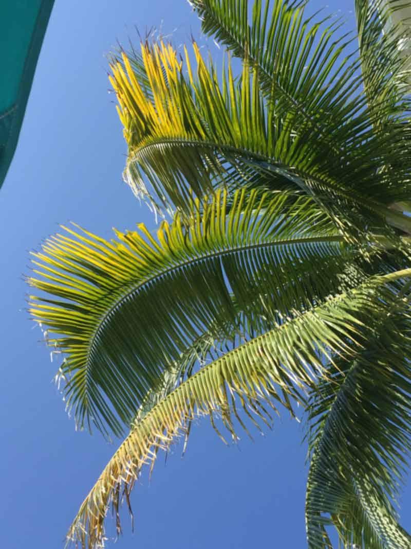 Palm tree and sky in Key West, FL