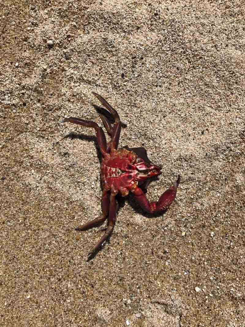a Crab in the sand
