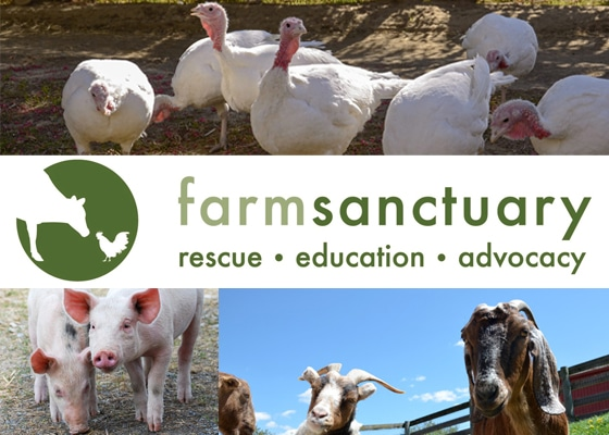 Farm Sanctuary Banner with a picture of turkeys, pigs, and goats
