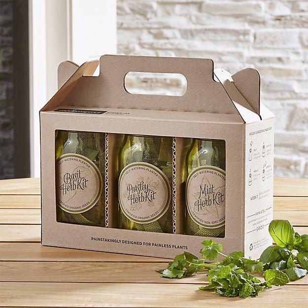 hydroponic herb kit